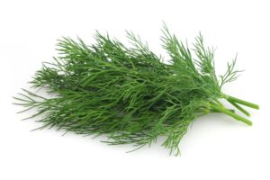 Dill-Benefits-Remedies-Origin-Nutritive-Value-Medicinal-Virtues-Uses1 (1)